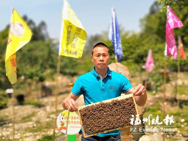 """连江新洋村:""""蜂""""回路转 尝绿色""""甜头"""""""
