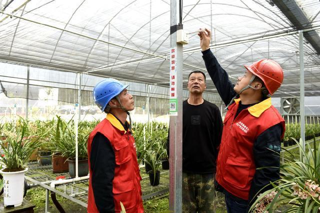 福建连江:电力来赋能 兰花更飘香