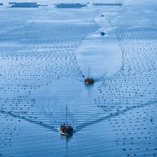 探访福建连江海上牧场:舟楫为马 海洋为田